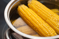 Some corn boiled in hot water Royalty Free Stock Photo