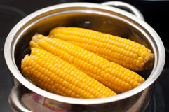 Some corn boiled in hot water Stock Image