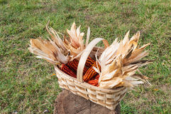 Some corncob in a basket, recently harvested Stock Photo