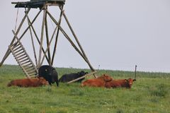 Cows in a pasture. Some Cows in a pasture Royalty Free Stock Photos
