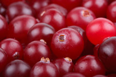 Some cranberries close-up. Stock Photos
