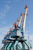Some of the cranes Royalty Free Stock Image