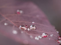 Some crystals on a leaf. Few waterdrops on a red leaf in a macroscopic view Stock Photo