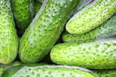 Some cucumbers in the water Royalty Free Stock Photography