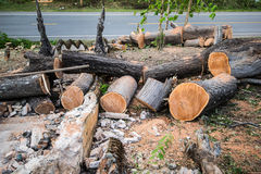 Some cut trees on wayside. Some cut trees on wayside at countryside Stock Photography