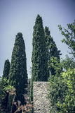 Some cypresses. In summer behind a wall Stock Photo