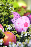 Some decorated easter eggs. Row of Easter Eggs with Daisy on Fresh Green Grass Stock Photo