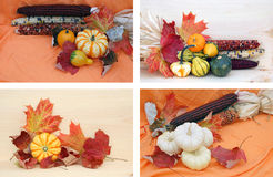 Some decorations of corns and pumpkins. For harvest season stock image