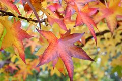 Some autumn leaves. Some different autumn leaves on a tree Stock Photo