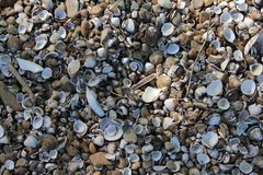 Some different shells. On a beach stock photo