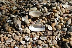 Some different shells. On a beach royalty free stock image