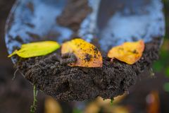 Some dirt with a crawling earthworm and a yellow autumn fallen leaves on a garden shovel. Some dirt with a crawling earthworm and a yellow autumn fallen leaves Royalty Free Stock Photo