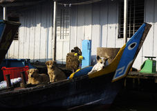 Some dogs. On the boat Royalty Free Stock Images