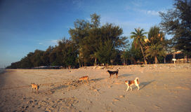 Some dogs on Cha am Beach. In Phetchaburi, Thailand in the morning stock photo