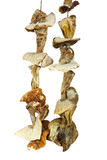 Some dried cepe mushrooms hanging on the rope Royalty Free Stock Photo