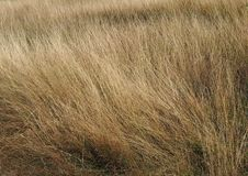 Some dried grass. On a field royalty free stock photography