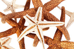 Some dried sea stars on white background. Some dried sea stars on white background, close up royalty free stock image