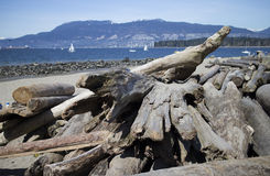 Some driftwood on the beach Stock Image