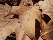 Dry leaves. Some dry fallen leaves. Autumn in Barcelona Royalty Free Stock Photos