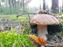 Mushrooms in forest Stock Image