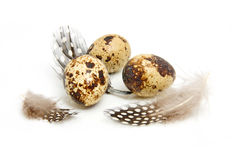 Some eggs from peewit bird Royalty Free Stock Photo