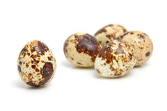 Some eggs from peewit bird. ( Vanellus Vanellus) over white background Stock Photography