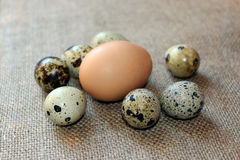 Some eggs of the quail. On the grey background Royalty Free Stock Image