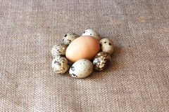 Some eggs of the quail and one of the hen. On the gret sacking background Royalty Free Stock Photos