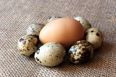 Some eggs of the quail and one of the hen. On the grey sacking background Stock Photos