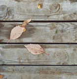 Some fallen leaves on wooden background Stock Photography