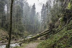 Fallen trees over a trail in the forest. Some fallen trees after a storm over a trail in the forest, Vosges, France Stock Photo