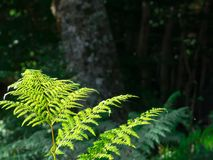 Some ferns in the forest. On a dark background Stock Photos