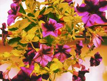 filtered flowers royalty free stock photos
