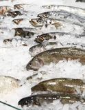 Some fish in ice Stock Photo