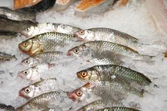 Some fish in ice in a supermarket Royalty Free Stock Photo