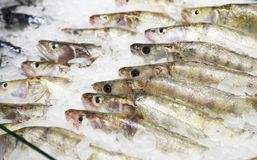 Some fish in ice in a supermarket Royalty Free Stock Photography