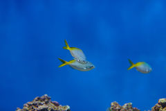 Some fishes in. Some types of exotic fishes in aquarium Stock Photo