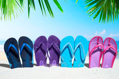 Some flip flops under palm fronds. A row with colorful flip flops under palm fronds on the sunny beach Royalty Free Stock Photo