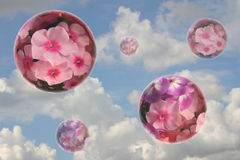 Some flower spheres. On a background of the cloudy sky Stock Image