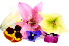 Some Flowers Stock Images
