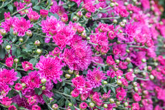 Some flowers in the garden. Autumn flowers background. Fresh and natural flowers Stock Photo