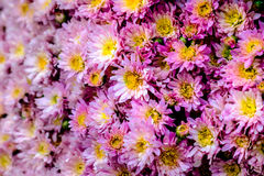 Some flowers in the garden. Autumn flowers background. Fresh and natural flowers Stock Photos