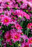 Some flowers in the garden. Autumn flowers background. Fresh and natural flowers Royalty Free Stock Image