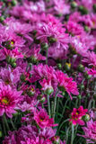 Some flowers in the garden. Autumn flowers background. Fresh and natural flowers Stock Photography