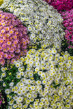 Some flowers in the garden. Autumn flowers background. Fresh and natural flowers Stock Images