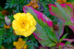 Some flowers in the garden. Autumn flowers background. Fresh and natural flowers Royalty Free Stock Images