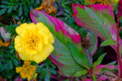 Some flowers in the garden. Autumn flowers background. Fresh and natural flowers Royalty Free Stock Photos