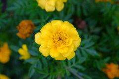 Some flowers in the garden. Royalty Free Stock Photos
