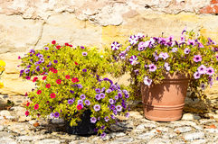 Some flowers in the summer Stock Photo