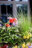 Some flowers at sunny day as landscape design elements.  Stock Photography